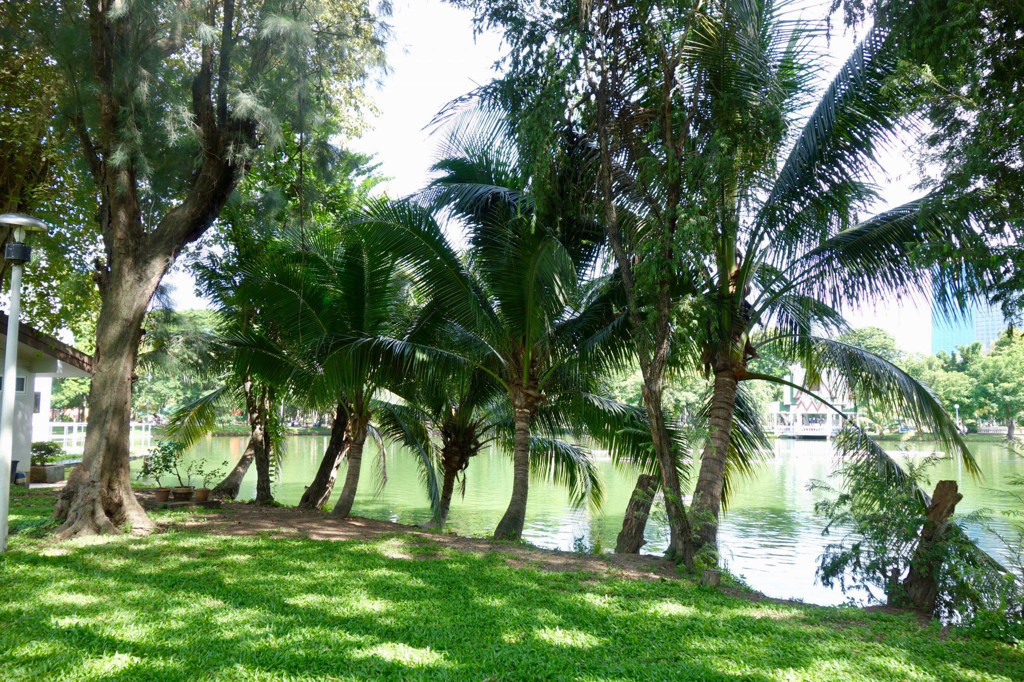 Thailand, Bangkok, Lumphini Park: wenn man vom Wasser fern bleibt, ist es ein wunderschöner Park!