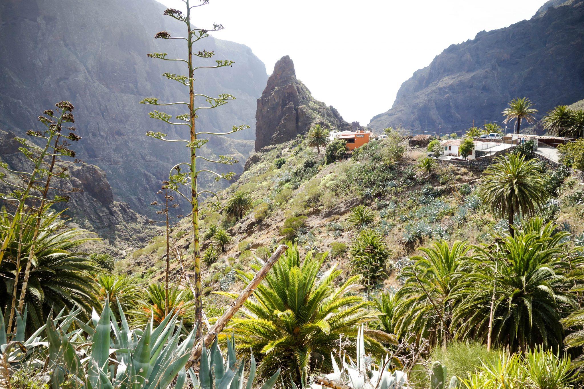 Teneriffa, Masca: Das winzige Bergdorf liegt mitten zwischen Felsen