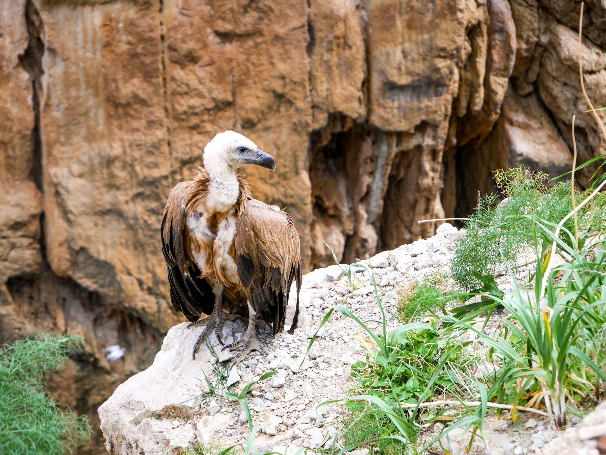 Caminito del Rey, Andalusien, Spanien: Mit ganz viel Glück, kannst du einen Geier sehen, der dort lebt!