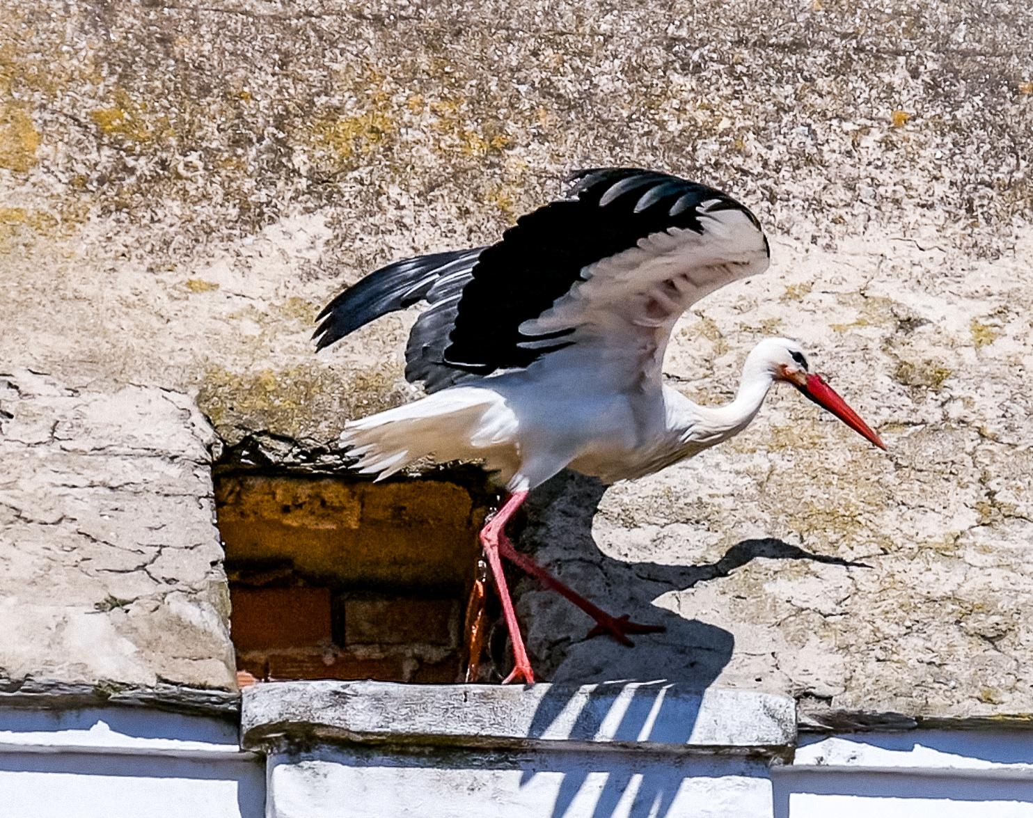 In Cáceres kannst du wunderschöne Vögel beobachten und immer wieder hören.