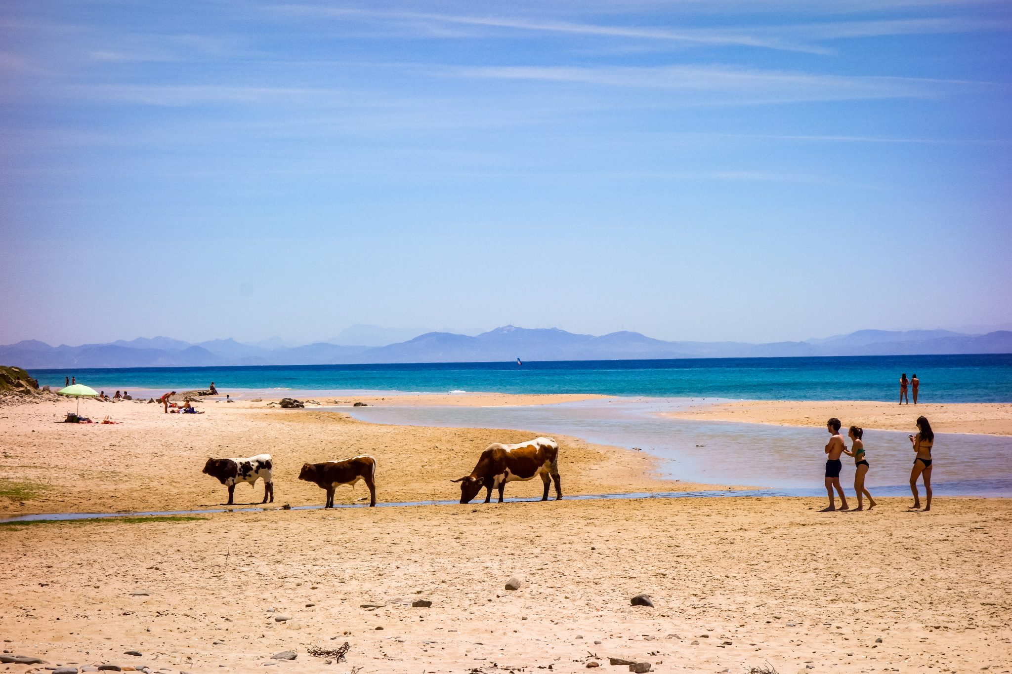 Am Strand von Bolonia kann man (wenn man Glück hat) Kühe sehen! Die laufen dort einfach frei herum. Übrigens: Die Berge im Hintergrund sind keine gewöhnlichen Berge, sondern auf dem Kontinent Afrika!