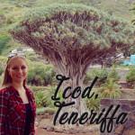 1.000 Jahre alter Drachenbaum: Icod de los Vinos, Teneriffa