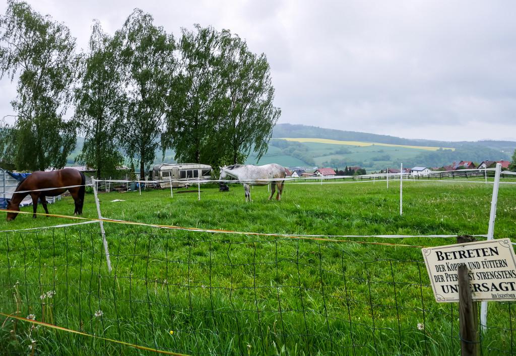 Das ist unsere Aussicht vom Schlaffass aus gewesen. Ewige Pferdeweide, Pferde direkt vor der Tür und wunderschöne Rapsfelder im Hintergrund.