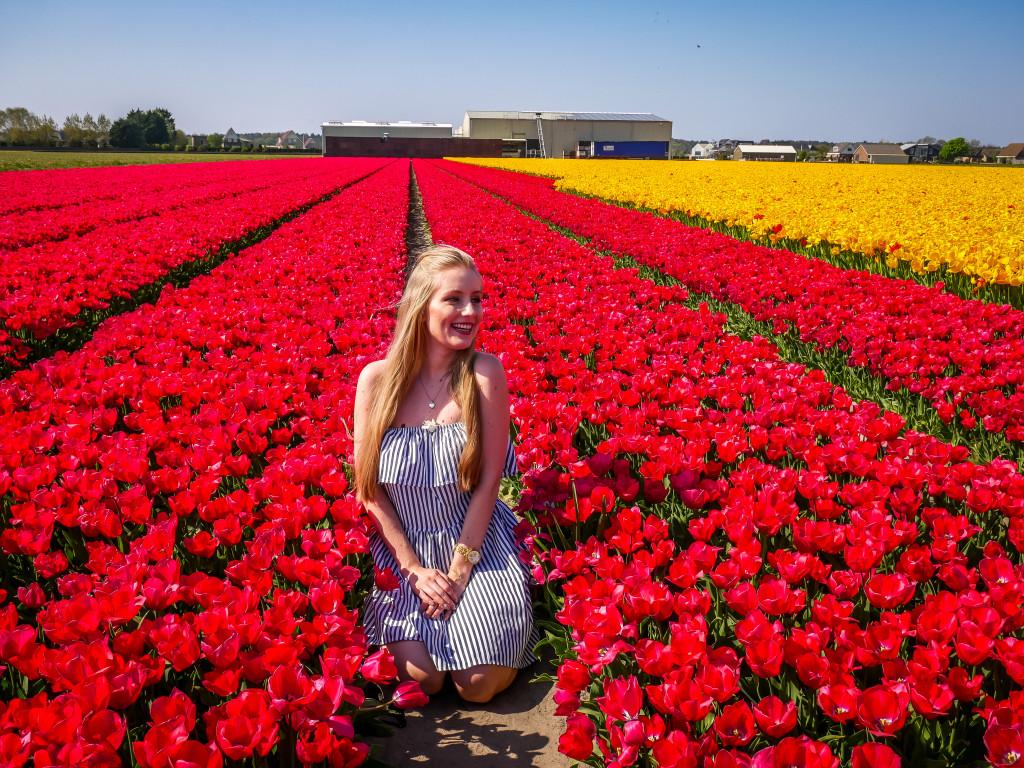 Wie ihr sehen könnt, man kann (wenn man vorsichtig ist) durch die Tulpenfelder laufen.