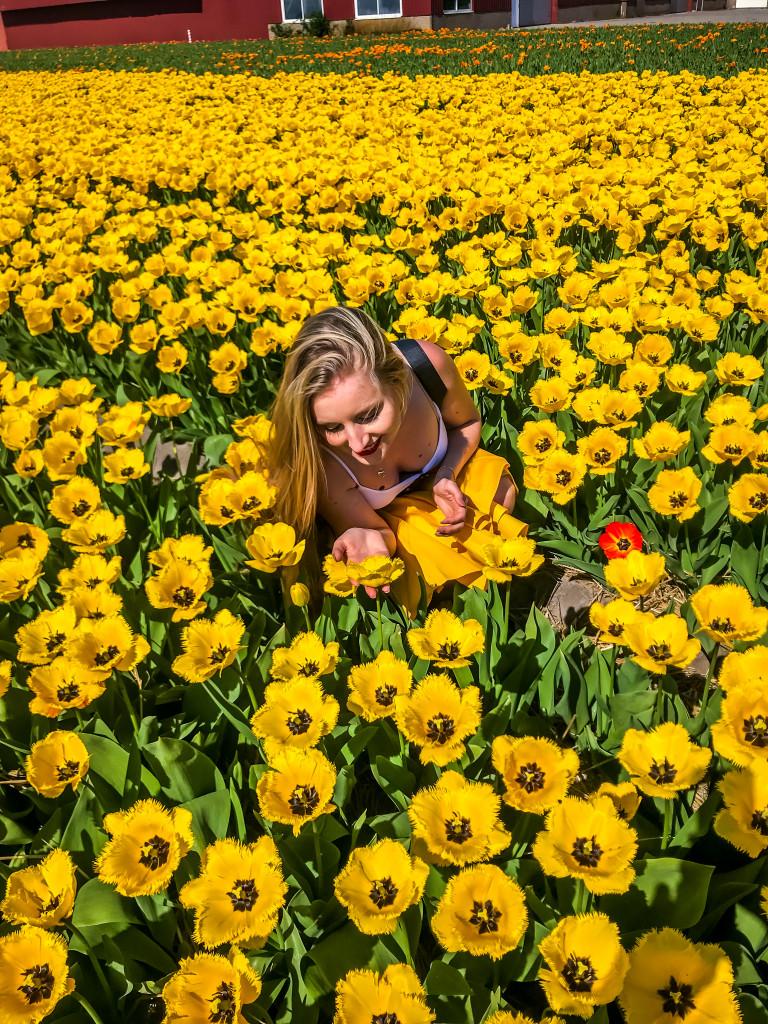 Könnt ihr glauben, dass die Niederländer gar nicht an den wunderschönen Tulpen, sondern an der Zwiebel interessiert sind?
