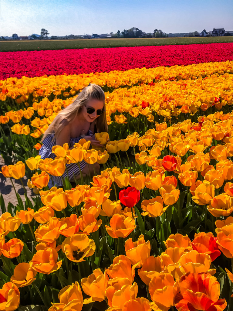 Dieser herrliche Duft von den Tulpenfeldern in den Niederlanden geht mir (hoffentlich) nie aus der Nase.