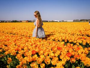 Durch die Tulpenfelder in den Niederlanden könnte ich ewig durchlaufen.