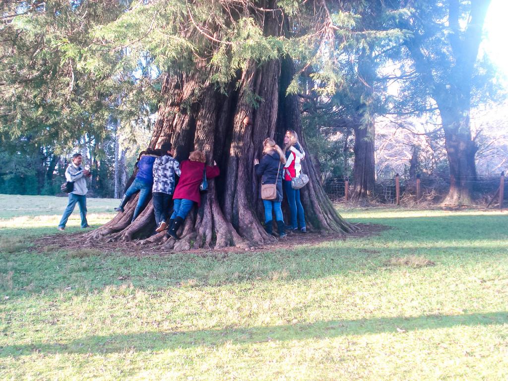 Als wir den Bootsausflug gemacht haben, haben wir einen ca. 500 - 700 Jahre alten Baum gesehen und umarmt. Dieser Baum stand bereits im Mittelalter genau an diesem Fleckchen Erde!